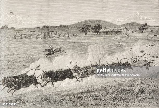 A runaway bullock team New South Wales Australia illustration from The Graphic volume XXVIII no 720 September 15 1883