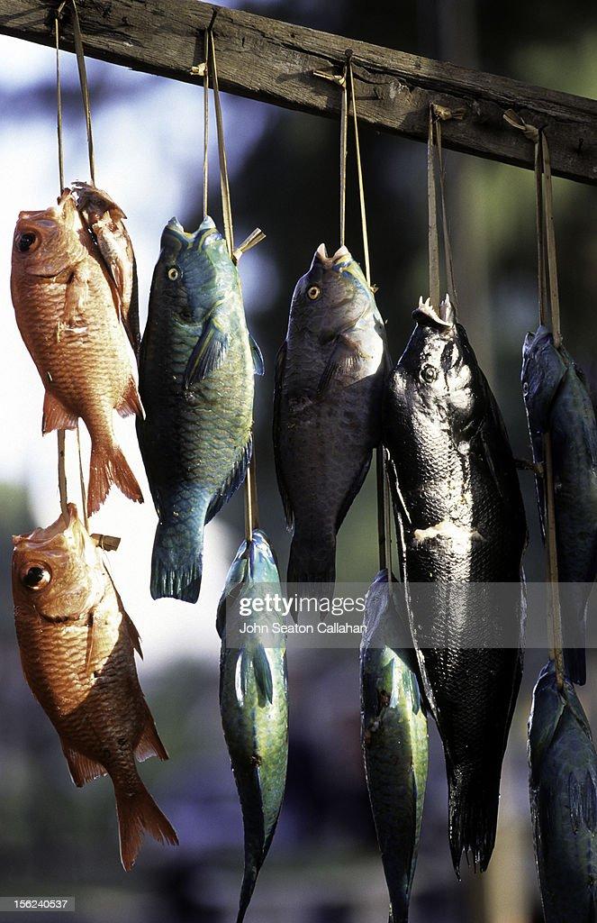 Réunion Island, fresh fish. : Stock Photo