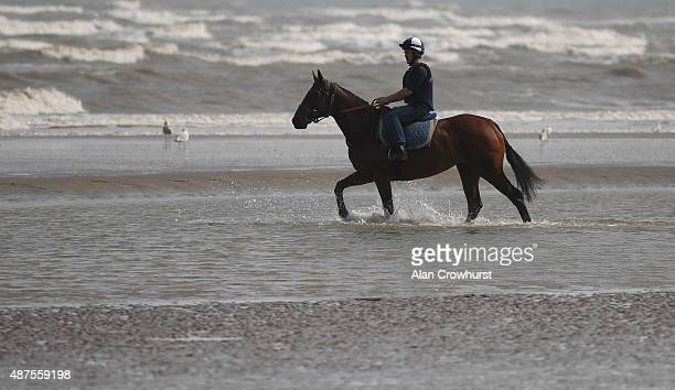 A runner exercises in the sea before racing at Laytown racecourse on September 10 2015 in Laytown Ireland