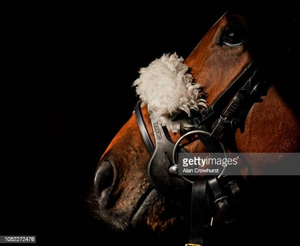 A runner in the saddling area at Huntingdon Racecourse on October 16 2018 in Huntingdon United Kingdom