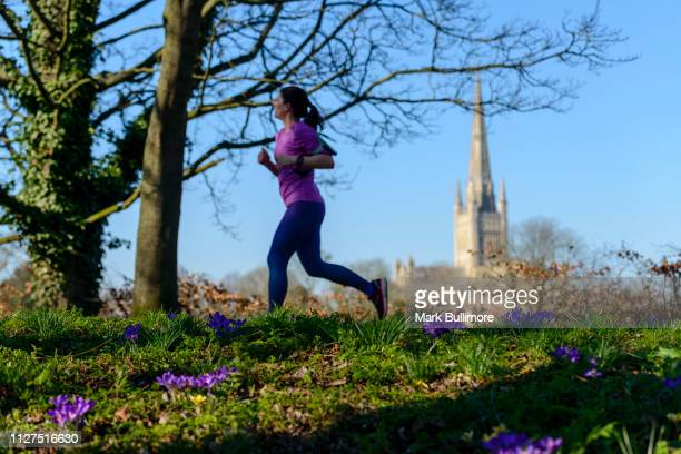A runner runs past some Purple crocuses in bloom on the banks of the River Wensum in the centre of Norwich with the Cathedral in the background on...