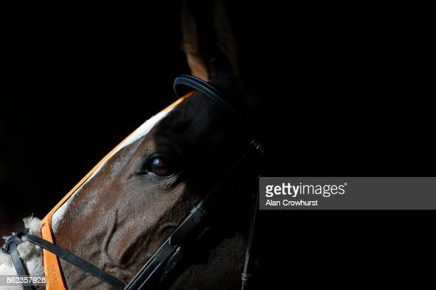 A runner waits in a saddling box at Huntingdon racecourse on October 17 2017 in Huntingdon United Kingdom