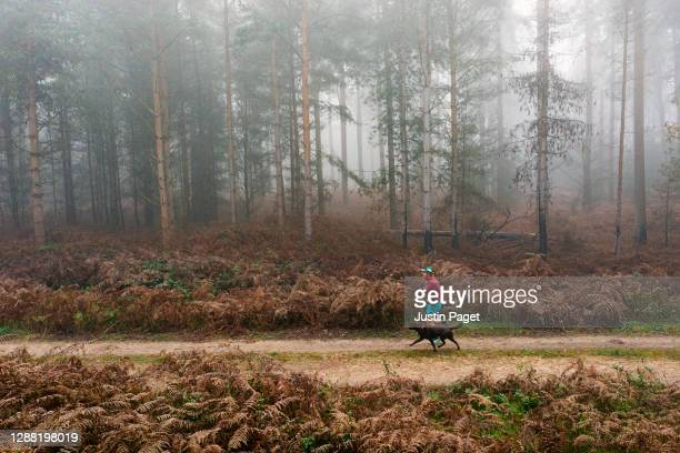 runner with his dog on forest track - drone point of view stock pictures, royalty-free photos & images