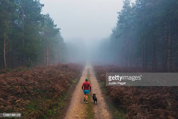 runner with his dog on forest track - running stock pictures, royalty-free photos & images