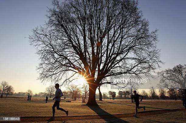 Worlds Best Bushy Park Stock Pictures Photos And Images