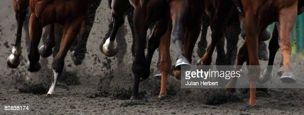 Runners head down the back straight during The National Centre For Epilepsy Claiming Stakes Race run at Lingfield Racecourse on September 16 in...