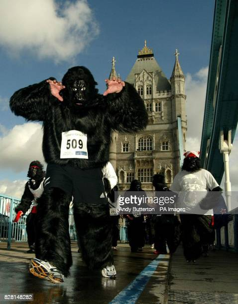 Runners in Gorilla costume take part in the Great Gorilla Run across Tower Bridge Competitors had ran 7km through central London to raise money for...