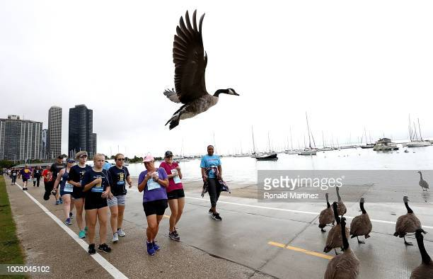 Runners pause as Canadian Geese cross to Monroe Harbor during the 2018 Humana Rock 'n' Roll Chicago 5K at Grant Park on July 21 2018 in Chicago...