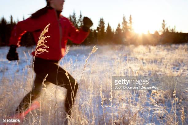 Running Across A Field With Snow And Long Grasses In Winter