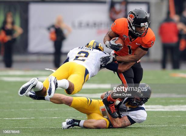 Running back Jacquizz Rodgers of the Oregon State Beavers is tackled by safety Chris Conte and cornerback Marc Anthony of the California Golden Bears...