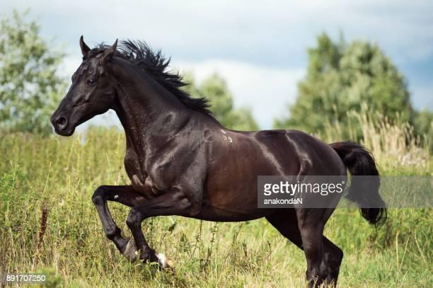 [最も共有された! √] かっこいい 馬 画像 - まつばら もりこs