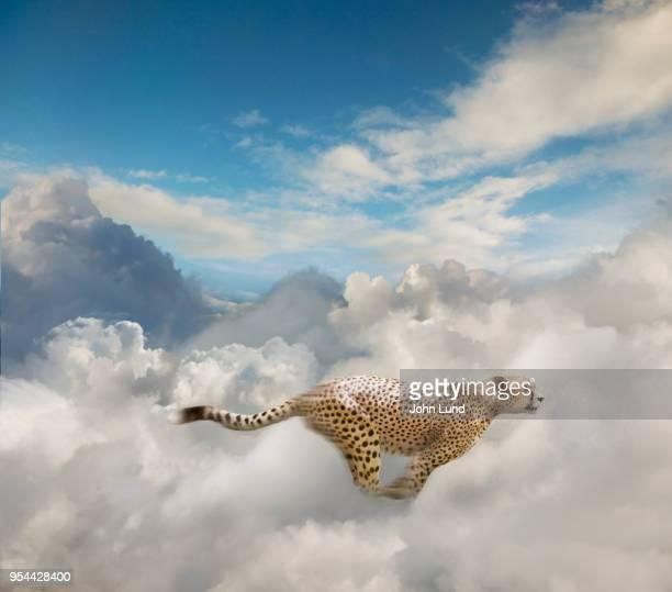 Running Cheetah In The Cloud