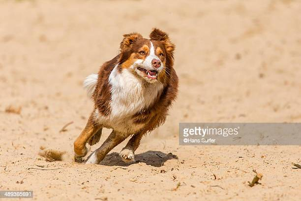 A running dog on yellow sand.