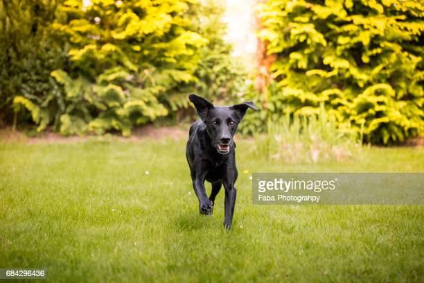 running dog - niedlich stockfoto's en -beelden