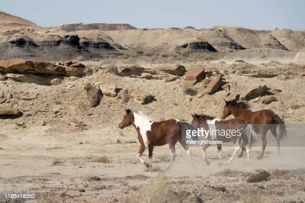 running free range horses bisti de-na-zin wilderness desert new mexico - milehightraveler stock pictures, royalty-free photos & images