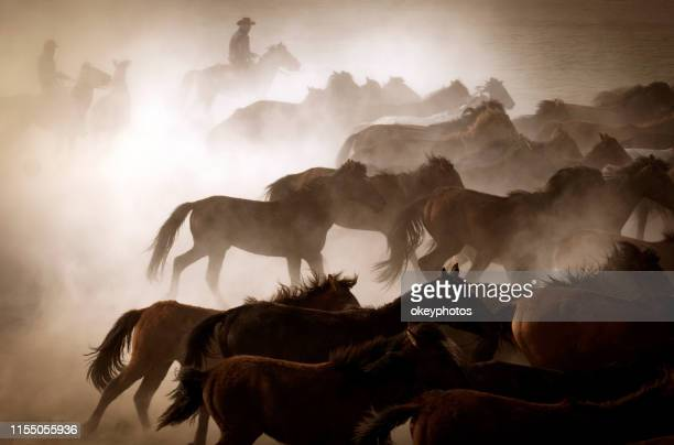 running horses - cowboy stock pictures, royalty-free photos & images