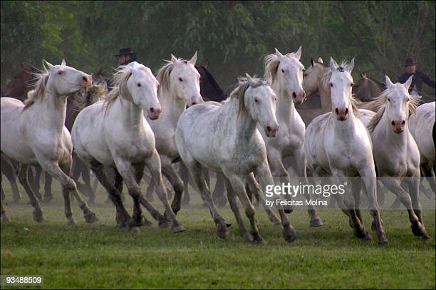 World S Best White Horse Stock Pictures Photos And Images