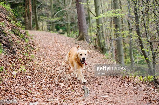 Running in forest