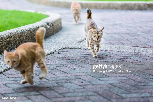 running kitten - felino salvaje fotografías e imágenes de stock