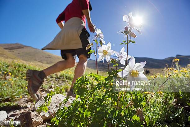 running mountain flower landscape