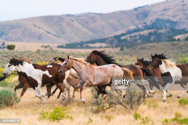 Running of the horses