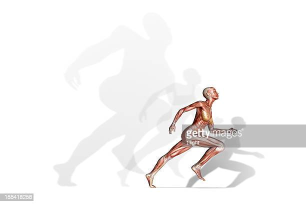 running - human muscle stock pictures, royalty-free photos & images