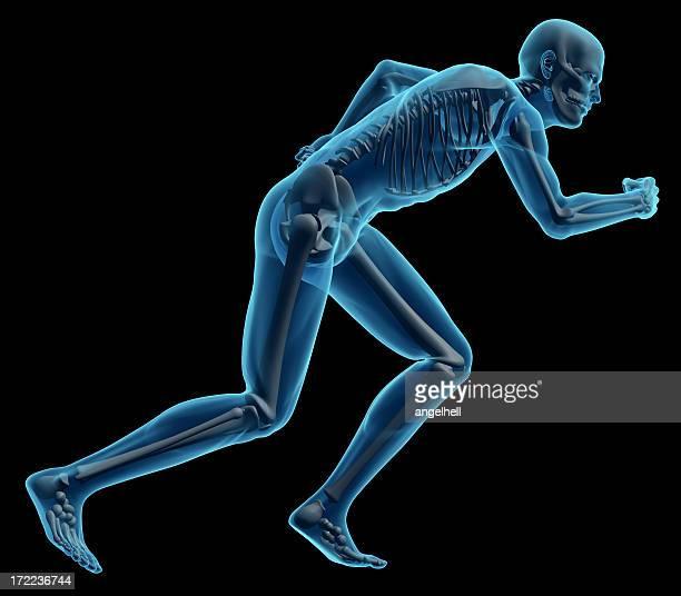Running pose of the human skeletal body