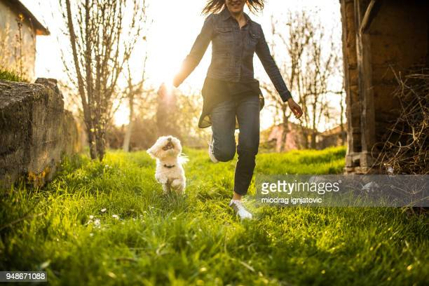 running with you is fun - maltese dog stock pictures, royalty-free photos & images