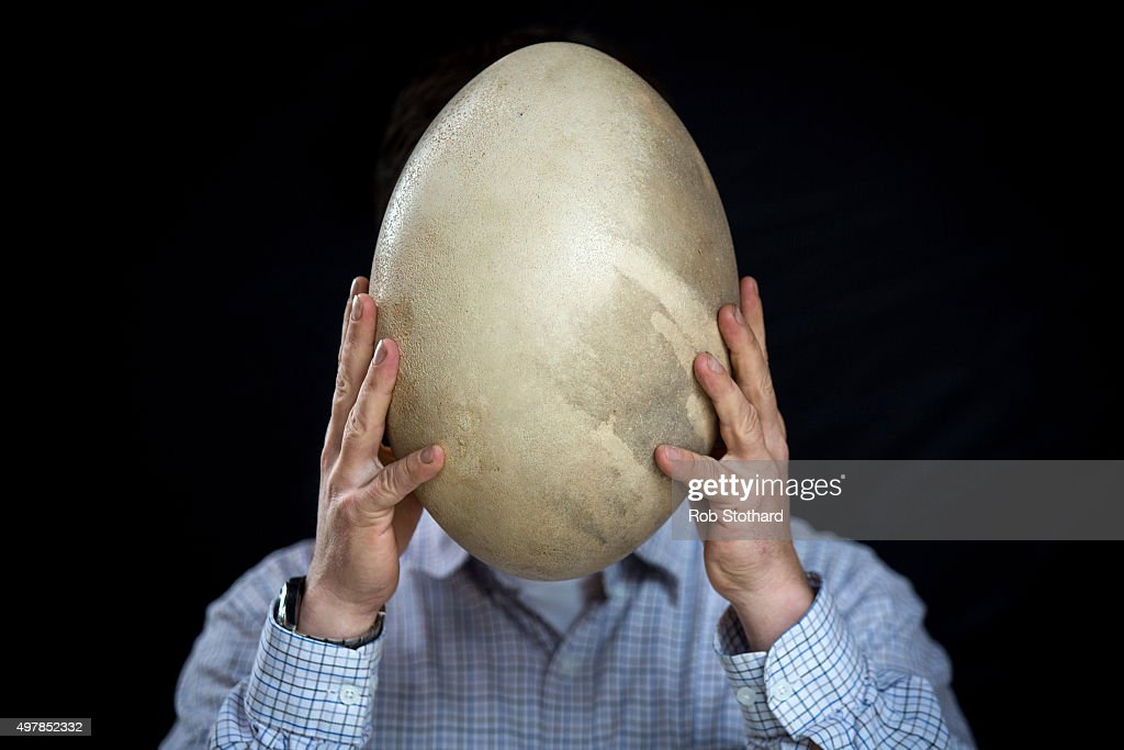 Rupert van der Werff, auctioneer, holds an intact Aepyornis (Elephant bird) egg estimated to sell for 30,000-50,000 GBP at Summers Place Auctions on November 19, 2015 in Billingshurst, England. Summers Place Auctions Third Evolution Sale of taxidermy, fossils and minerals will take place on November 25.