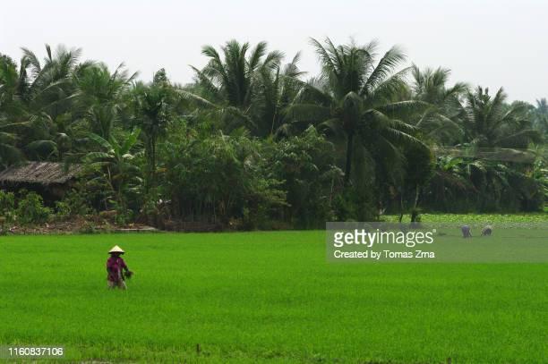 Rural atmosphere in the Mekong delta