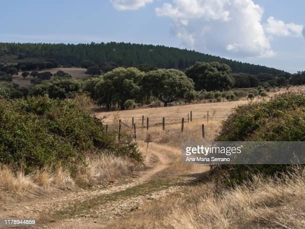 rural dirt road in the dehesa with barbed wire fences on the sides in salamanca - サラマンカ ストックフォトと画像