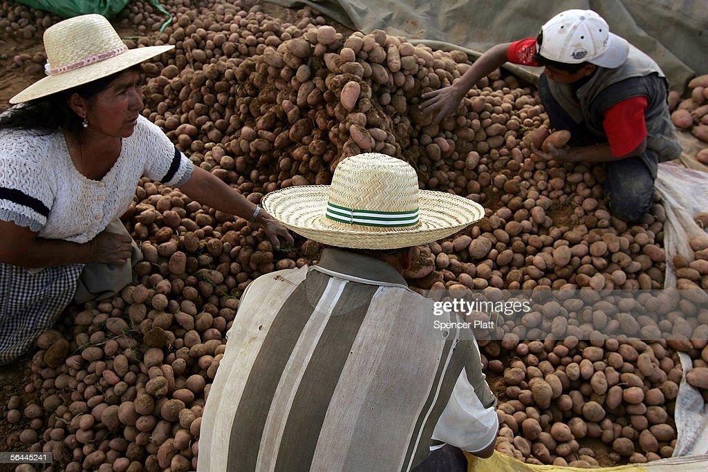 Bolivian Rural Poverty Invigorates Leftist Vote : News Photo