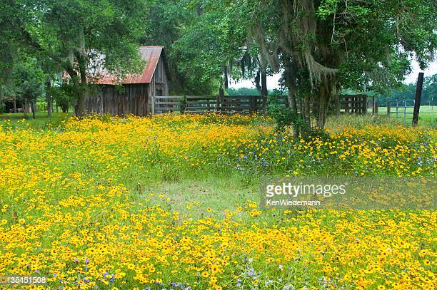 rural georgia barn - georgia country stock pictures, royalty-free photos & images