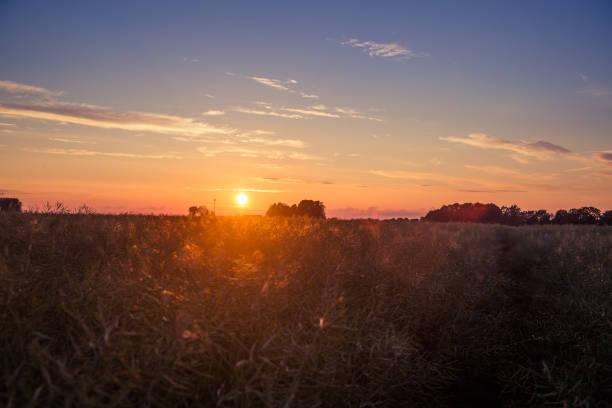 Rural landscape at sunset, Stende, Latvia