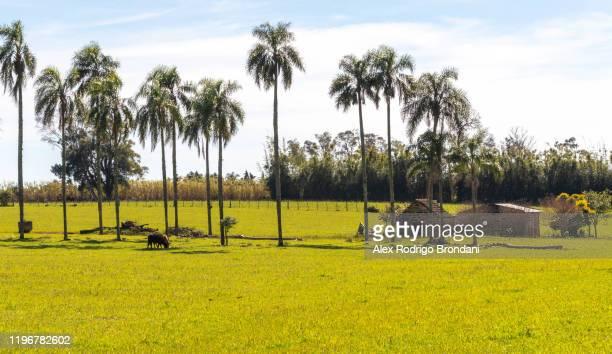 rural landscape cerro chapadão locality interior