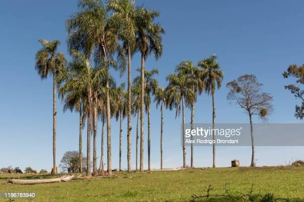landscape palm trees cerro chapadão locality