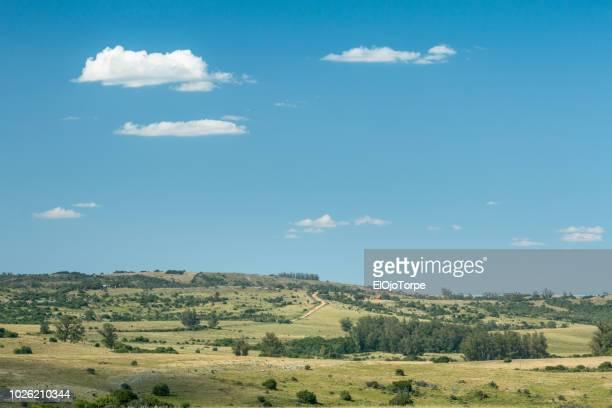 rural landscape in maldonado department, windy road, hills, uruguay - maldonado uruguay stock pictures, royalty-free photos & images
