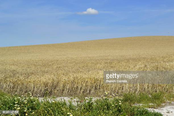 Rural landscape in spring in Cadiz