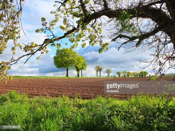 rural landscape in springtime, niort, deux-sevres, france - deux sevres - fotografias e filmes do acervo