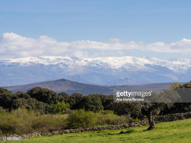 rural landscape in springtime with green fields and snow in the mountains - salamanca imagens e fotografias de stock
