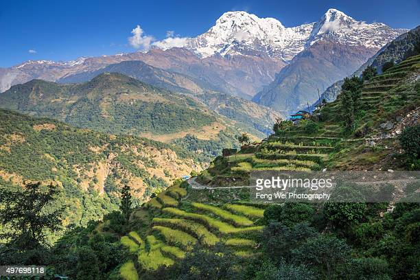 rural landscape, landruk, annapurna region, nepal - annapurna south stock photos and pictures