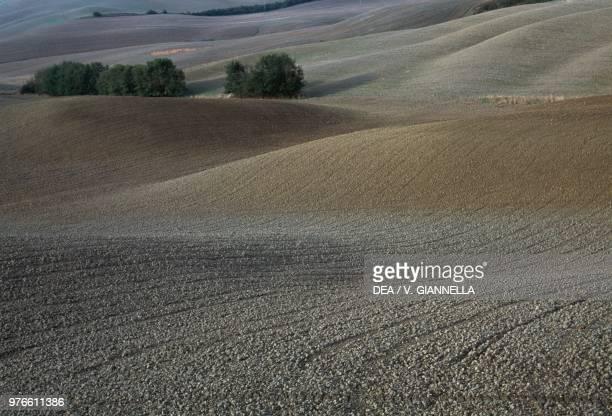 Rural landscape near Montalcino Val d'Orcia Tuscany Italy