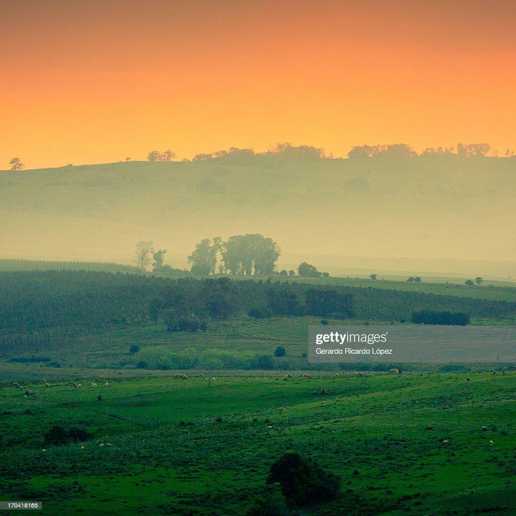 Rural landscape : Stock Photo
