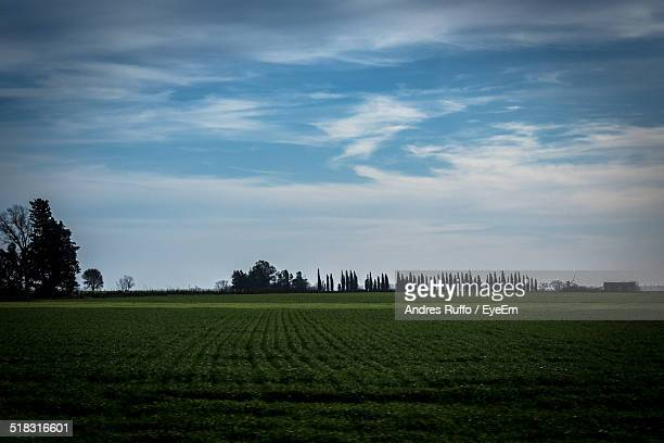 rural landscape - andres ruffo stock pictures, royalty-free photos & images