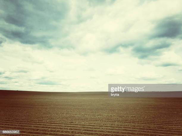 rural landscape with a plowed field and a lonely tree at the horizon,vlaams brabant,flanders,belgium - flamengo imagens e fotografias de stock