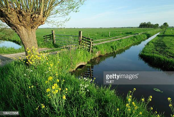 Rural landscape with ditch in the Netherlands