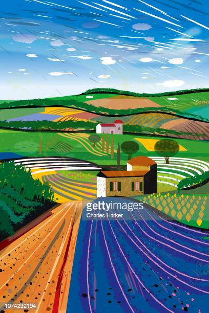 Rural Landscape with Lavender farm fields Illustration