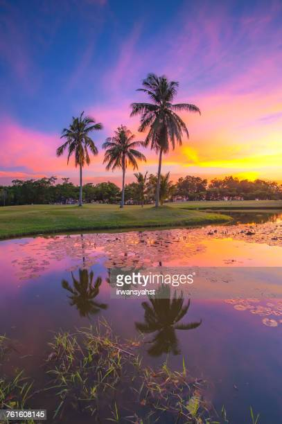 Rural landscape with Palm trees, Batam City, Riau Islands, Indonesia