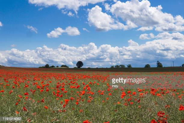 rural landscape with poppies, worcestershire, england, uk - poppy field stock photos and pictures