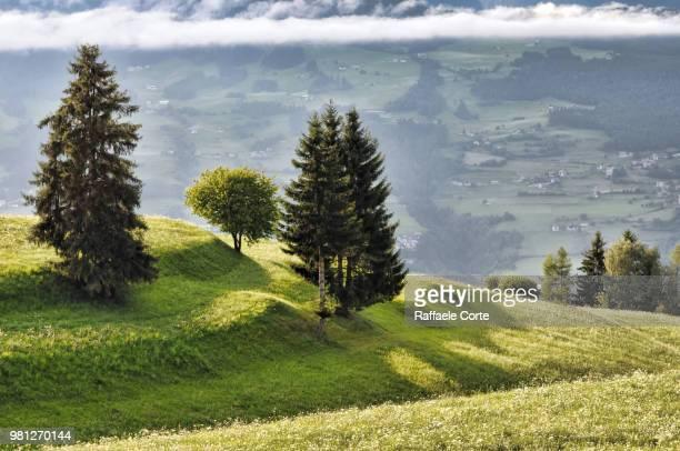 rural landscape with trees, south tyrol, italy - raffaele corte foto e immagini stock